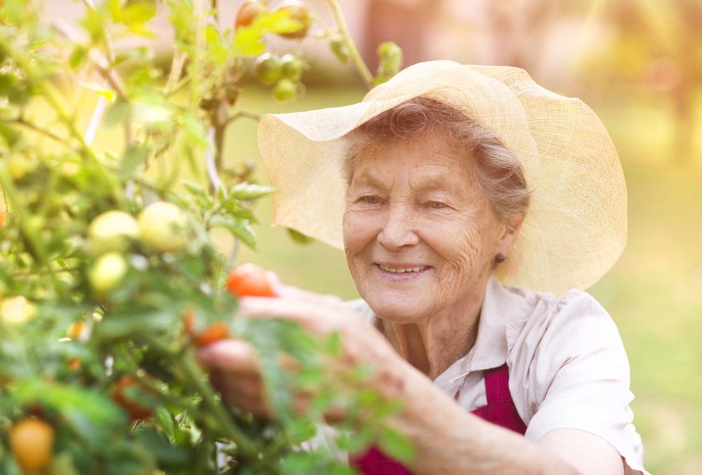 senior-living-garden